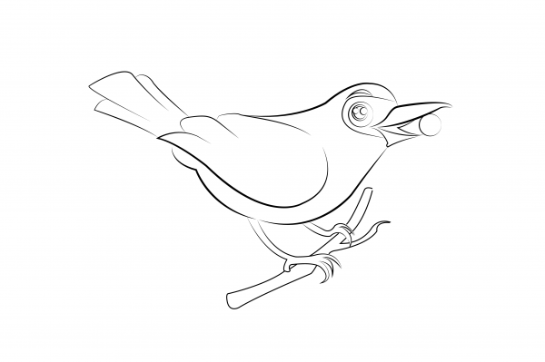Bellbird Colouring Page